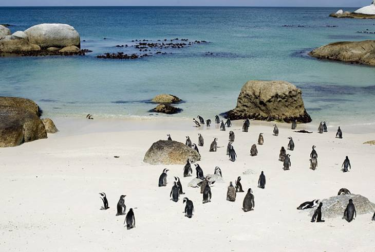 The African penguin colony at Boulders Beach in Simon's Town