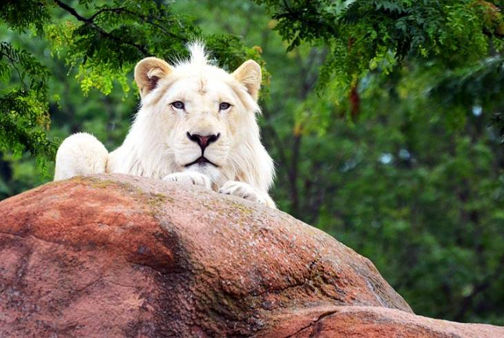 Queens Park Zoo East London Zoo Information WhereToStaycoza - Children's birthday party london zoo