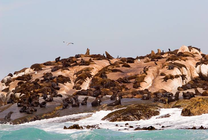 A group seals taking in the sun at Seal Island, False Bay