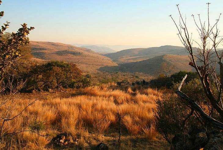 The malapa site at the Cradle of Humankind is the site of discovery of the early hominin species Australopithecus sediba