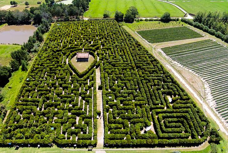 The largest permanent hedge maze in the Southern Hemisphere