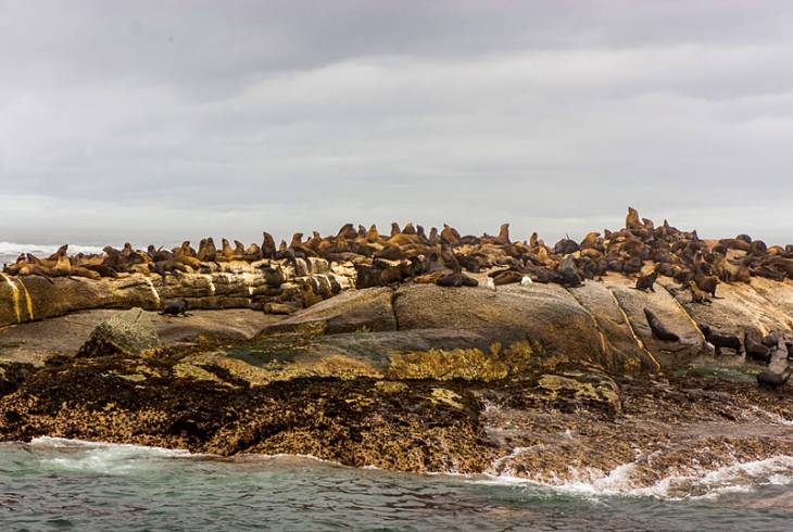 Duiker Island, off the coast of Hout Bay, is home to a plethora of Cape fur seals. Also known as Seal Island, but not to be confused with the one in False Bay