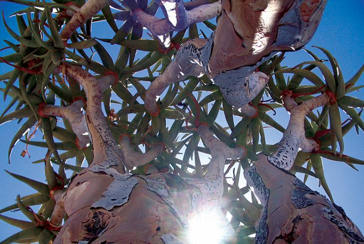 Quiver tree leaves