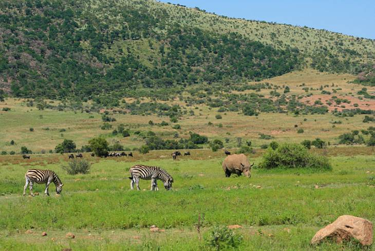 Pilanesberg National Park - beauty and tranquility guaranteed