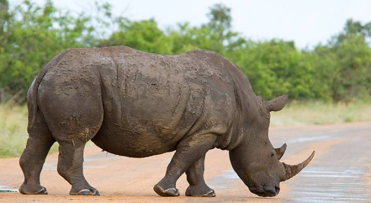 Kruger National Park & Lowveld Accommodation | Information