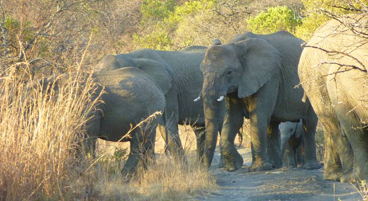 Ladysmith Nambiti Game Reserve