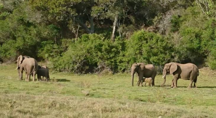 Elephants at Sibuya Game Reserve