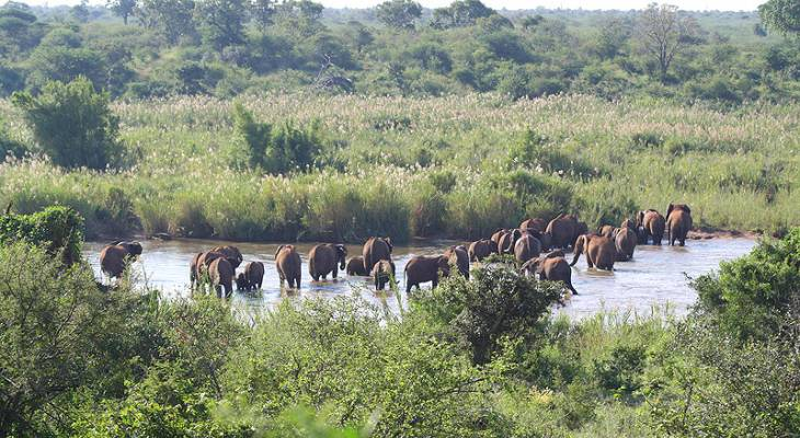 Elephants Crossing the Sabie River