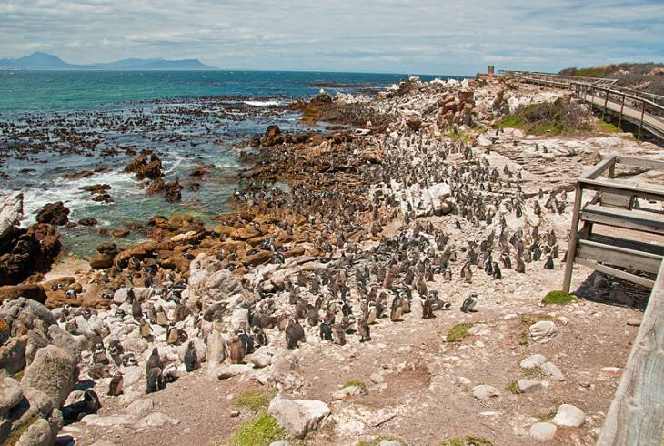 Betty S Bay Overberg Whale Coast Deal Direct Pay Less
