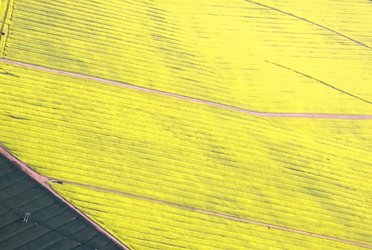 Canola! From the air over Hermon, Cape West Coast