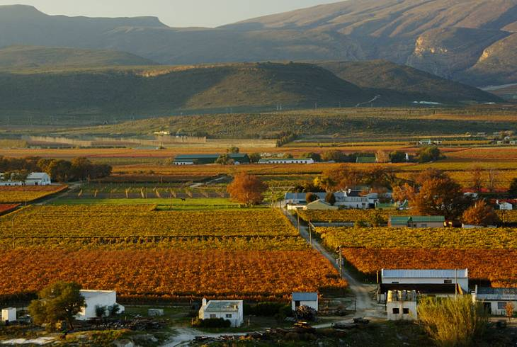 The vineyards at De Doorns, Hex River Valley, South Africa, during fall